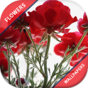 HD Rose Flowers Live Wallpaper