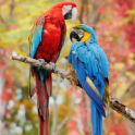 Beauty Birds Live Wallpaper