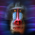 Monkey Live Wallpaper