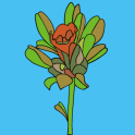 Uganda Medicinal Plants