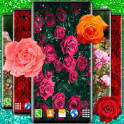 Red Rose Live Wallpaper Romantic Wallpapers