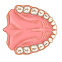 Dentist Pro