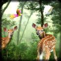 Rain Forest LWP