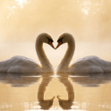 Swans Jigsaw Puzzles