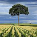 Tile Swap Landscape Images