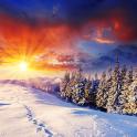 Winter Live Wallpaper HD FREE