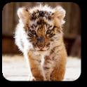 Little Tiger Live Wallpaper