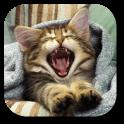 Pussycat Live Wallpaper