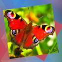 Déjà Vu - Butterflies