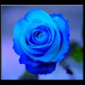 नीले लाइव वॉलपेपर गुलाब