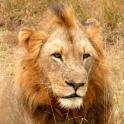 South Africa Safari Tour Guide