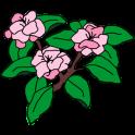 Cherry Blossom Bakery