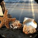 Beautiful Beach Frames Photo Editor