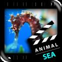 최고의 바다 동물