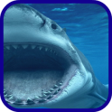 Shark mer bleue