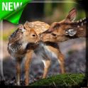 Deers Video Live Wallpaper