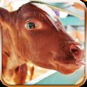 Cow Simulator 3D 2016