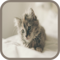 Kitten Sounds and Puzzles Free