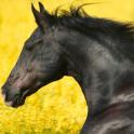 Wild Animals Horse HD Themes