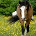 Wild Animals Horse Wallpapers