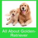 All About Golden-Retriever