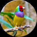 HD Bird Wallpapers