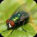 Fly Sounds Prank
