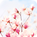Magnolia Flower Live Wallpaper