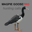 Magpie Goose Calls for Hunting