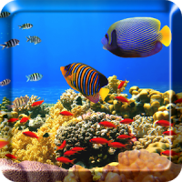 Ocean Fish Live Wallpaper Free