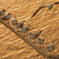 Wild Birds Wallpapers