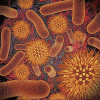 Infectious Disease Compendium