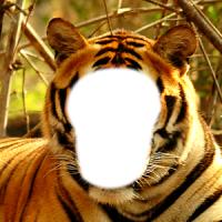 호랑이 사진 몽타주