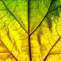 Leaf Photo Collage Editor