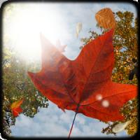 Falling Leaves Live Wallpaper