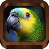 Bird Sounds, Calls, Songs & Ringtones