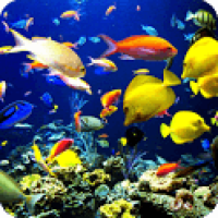 3D Underwater World