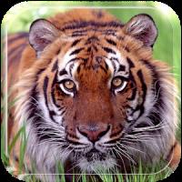 Ferocious beast Animal Wallpaper