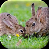 Bunny Live Wallpaper
