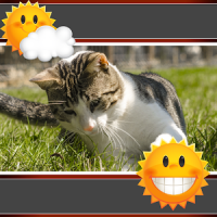 Cats Clock And Weather