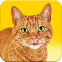 Friskies® Call Your Cat