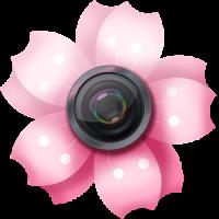Lovely Sakura Picture Frames