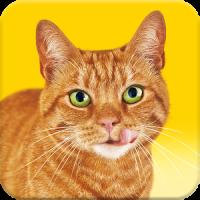 Go-Cat® Call Your Cat