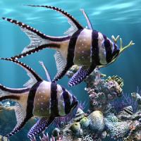 El acuario real - HD