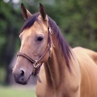 Horse HD Themes