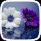 Purple Flowers Theme