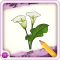 Draw Flower - Full Version