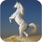 Horses HD images