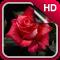 3D Rose Live Wallpaper HD