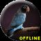 Masteran Lovebird Paud Ngekek Panjang MP3
